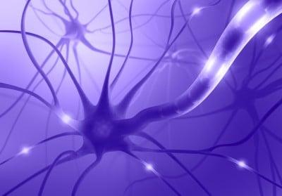 Stress et développement cérébral