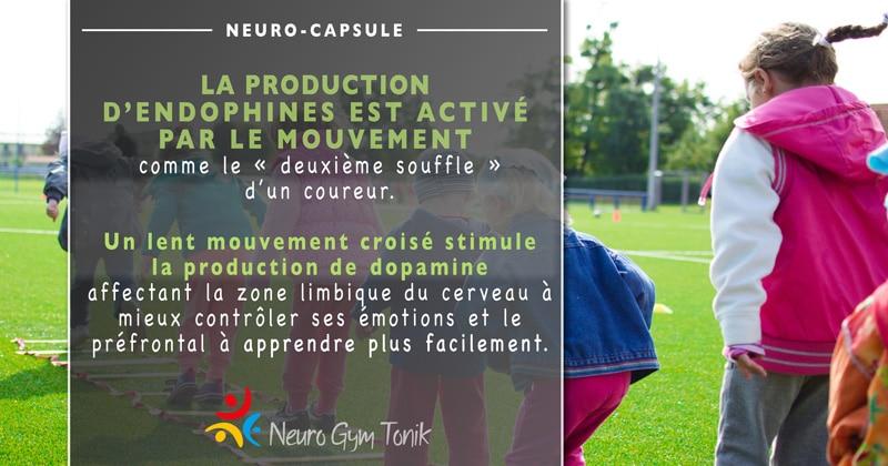Les endorphines | Neuro-Capsule